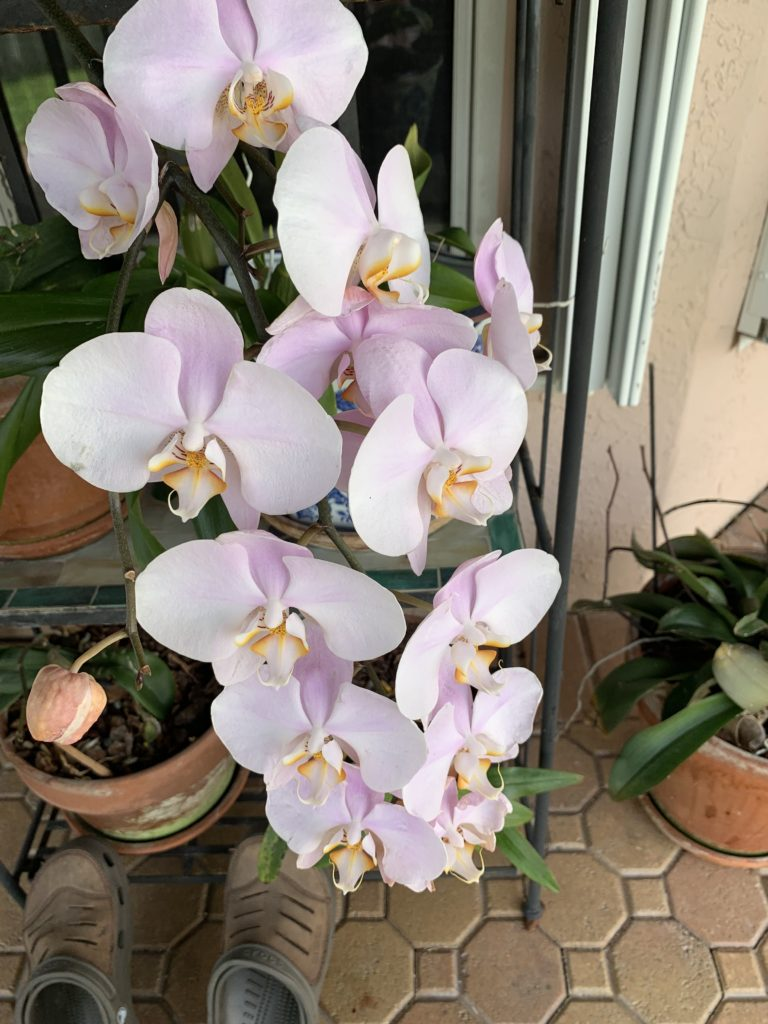 Premium Organic Plant Based Fertilizer Orchid 2