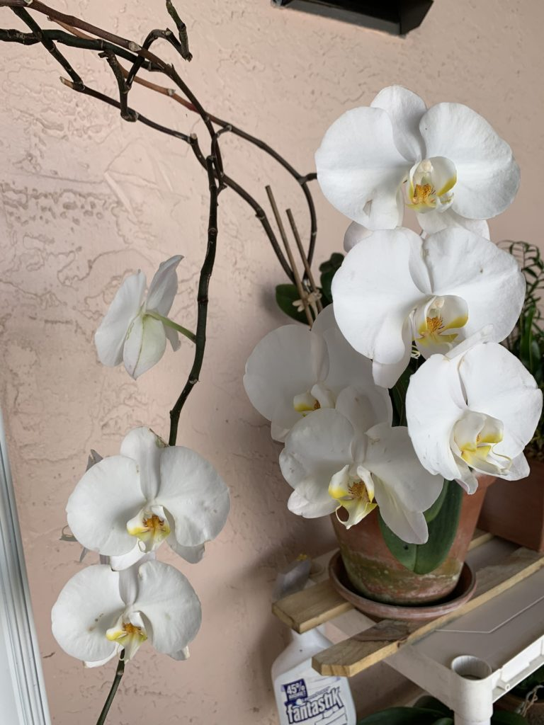 Premium Organic Plant Based Fertilizer Orchid 1