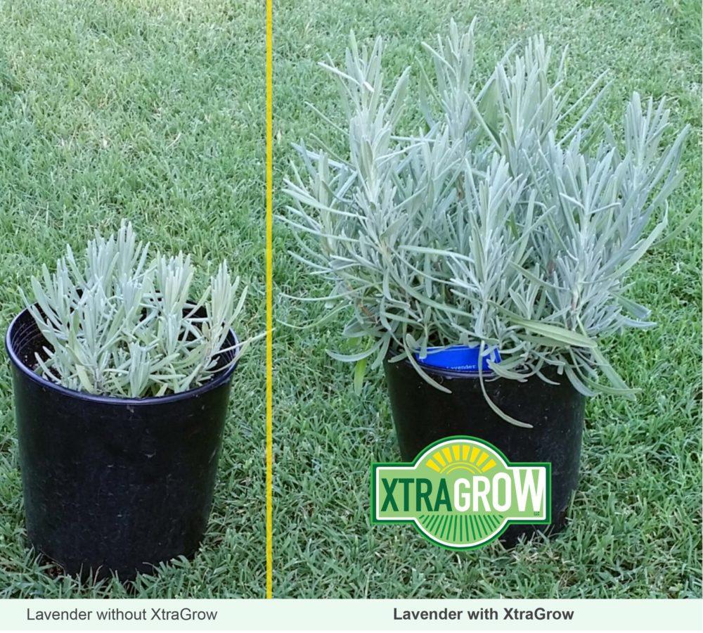 Premium Organic Plant Based Fertilizer Lavender